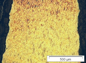 fig-g-micrograph-dagger-aoe-jpg